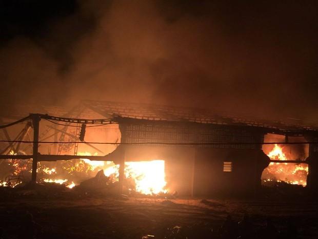 Incêndio destruiu galpão e materiais da ONG, em Buíque (Foto: Reprodução/Facebook ONG Amigos do Bem)