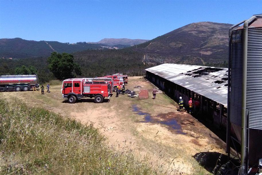 Aviário ficou parcialmente destruído Foto Ana Peixoto Fernandes/jn